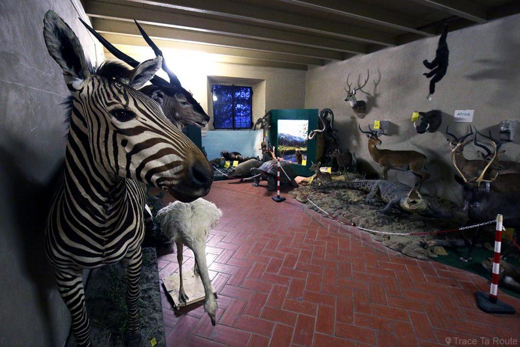 Exposition animaux empaillés taxidermie musée zoologique Villa Baciocchi, Capannoli (Valdera, Toscane, Italie)