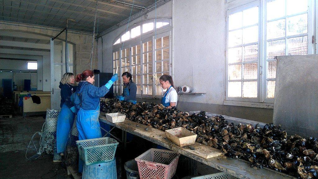 Les Mas, ou magasin, à Bouzigues, où les coquillages sont triés après la récolte, le matériel entroposé