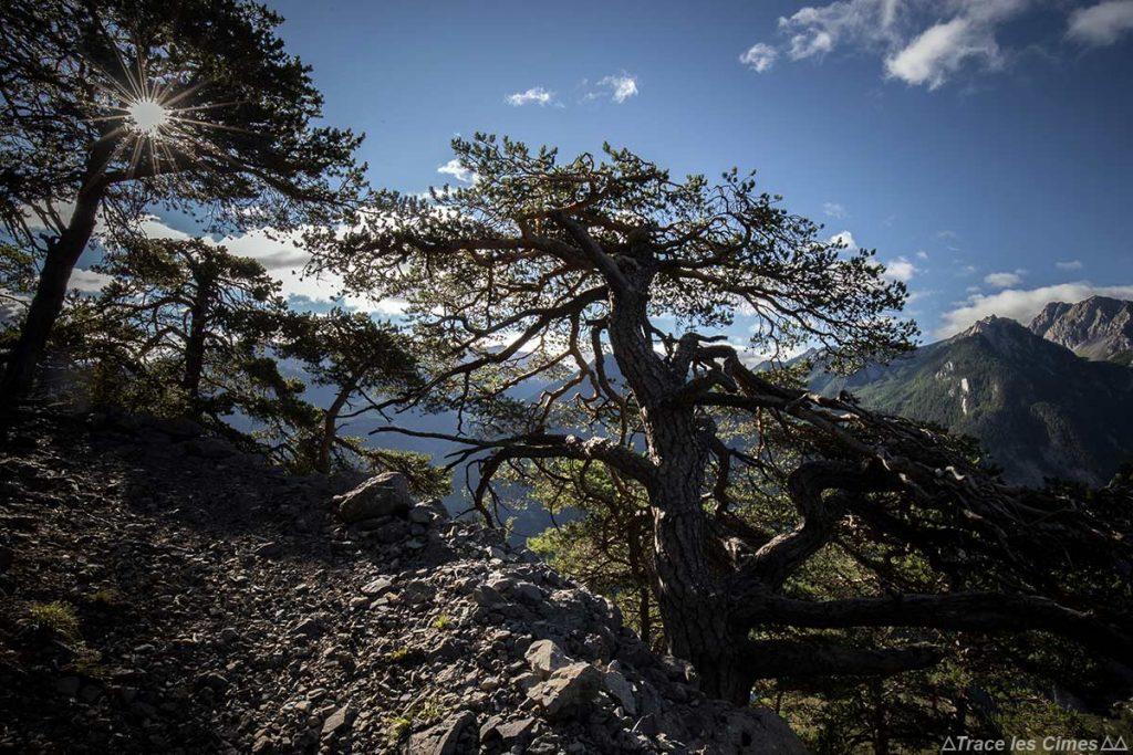 Sentier de randonnée GR 58 Tour du Queyras, descente du Col de la Lauze vers Le Châtelard, Hautes-Alpes