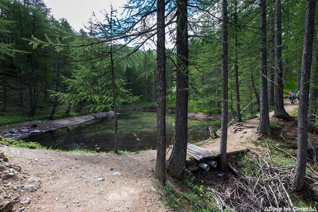 Étang de forêt sentier de randonnée du Plan du Vallon - Queyras, Hautes-Alpes