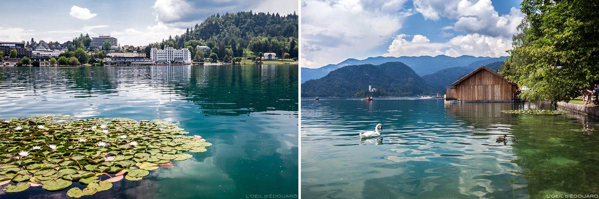 Le Lac de Bled, Slovénie - Blejsko jezero, Slovenia