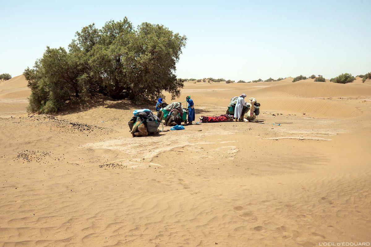 Trek dans le désert du Maroc avec les dromadaires