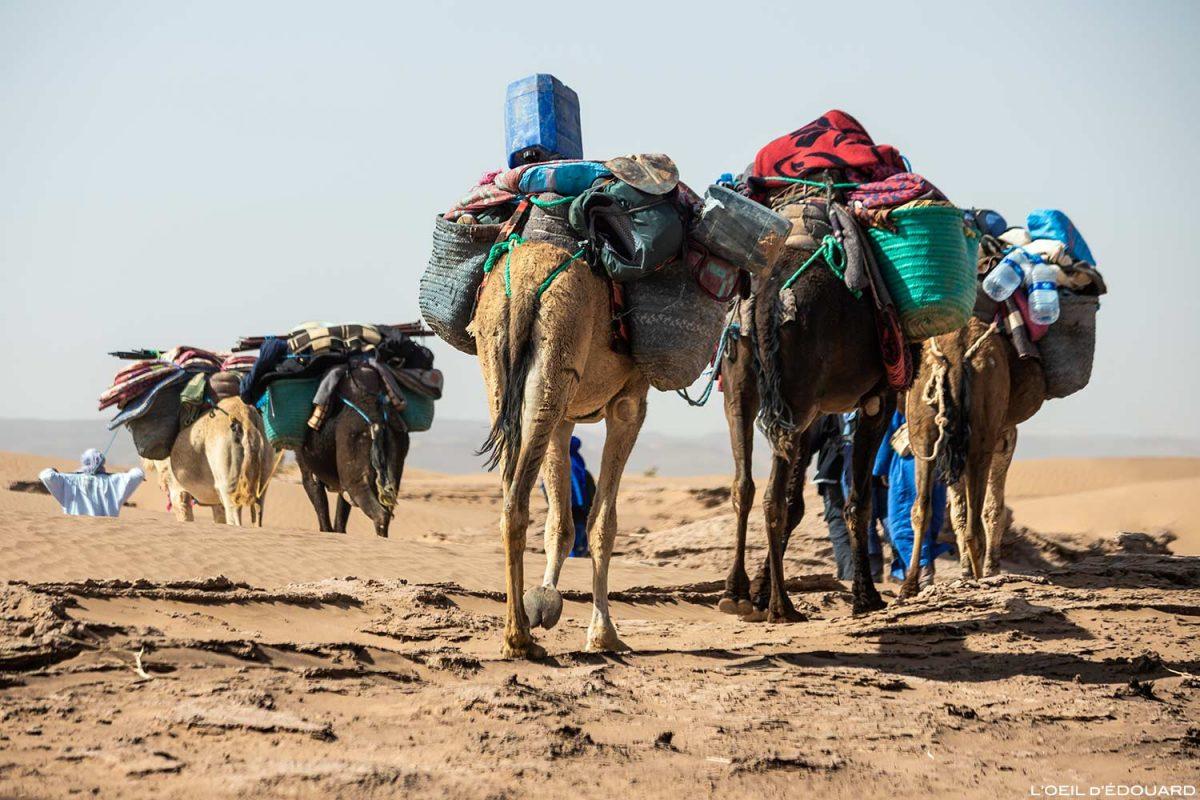 Caravane de dromadaires lors du trek dans le désert du Maroc avec Mélodie du Désert