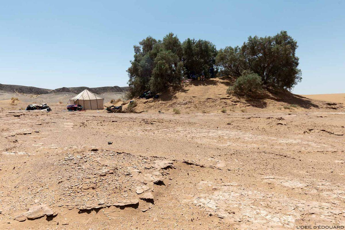 Bivouac sous les tamaris dans le désert du Maroc