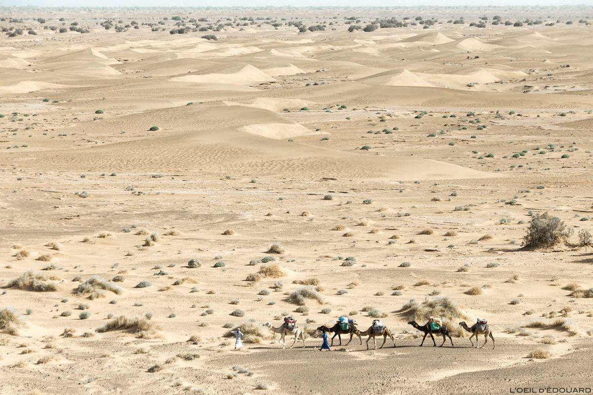 Caravane nomade de dromadaires le désert du Maroc
