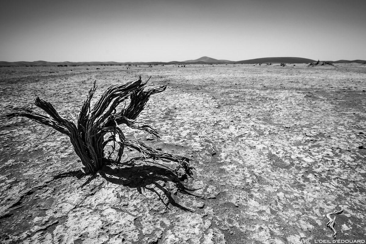 Arbre mort dans le Désert du Maroc
