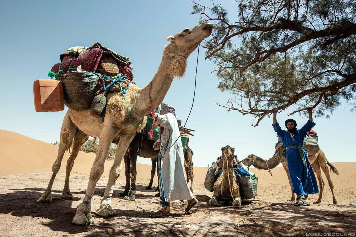 Dromadaires et nomades sahraouis dans le Désert du Maroc - Trek Mélodie du Désert © L'Oeil d'Édouard