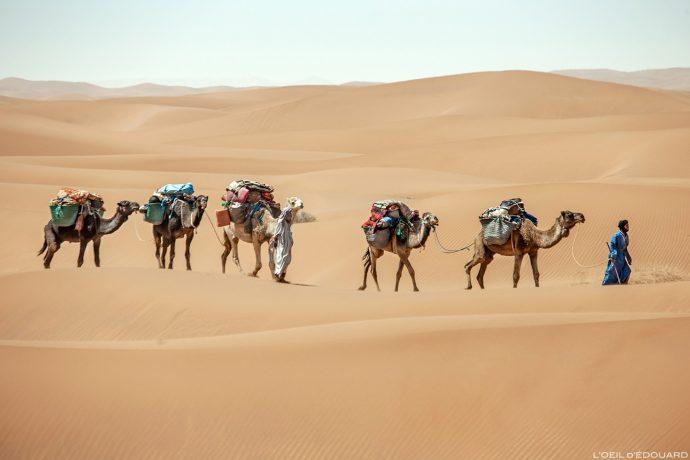 Trek dans le Désert du Maroc : Caravane nomade sahraouie avec les dromadaires - Trek Mélodie du Désert © L'Oeil d'Édouard