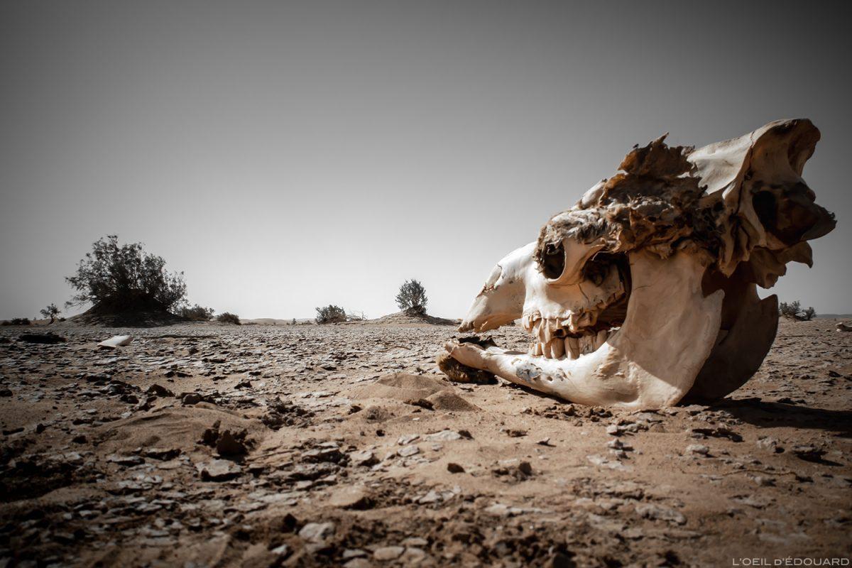 Crâne de dromadaire dans le Désert du Maroc © L'Oeil d'Édouard