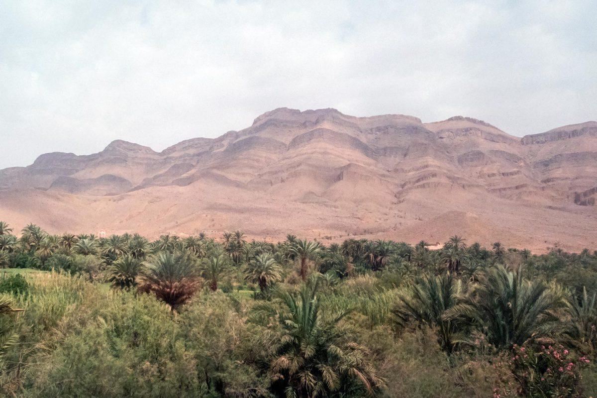 Montagne et palmeraie sur le bord de la route N9 dans la Vallée du Draâ, Maroc