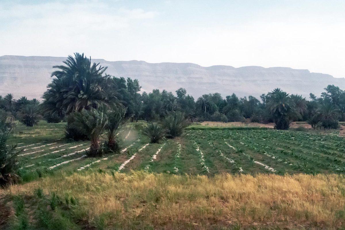 Culture et palmeraie sur le bord de la route N9 dans la Vallée du Draâ, Maroc