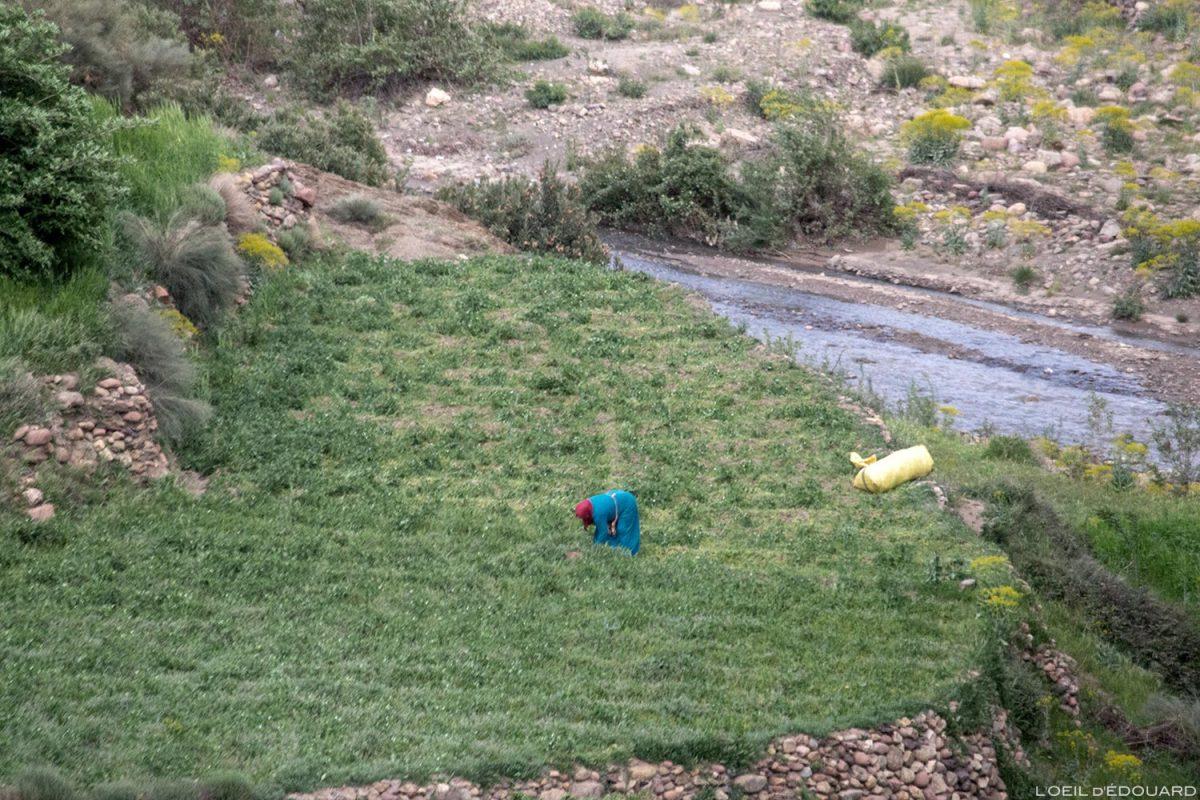 Récolte d'une femme cultivatrice au Maroc