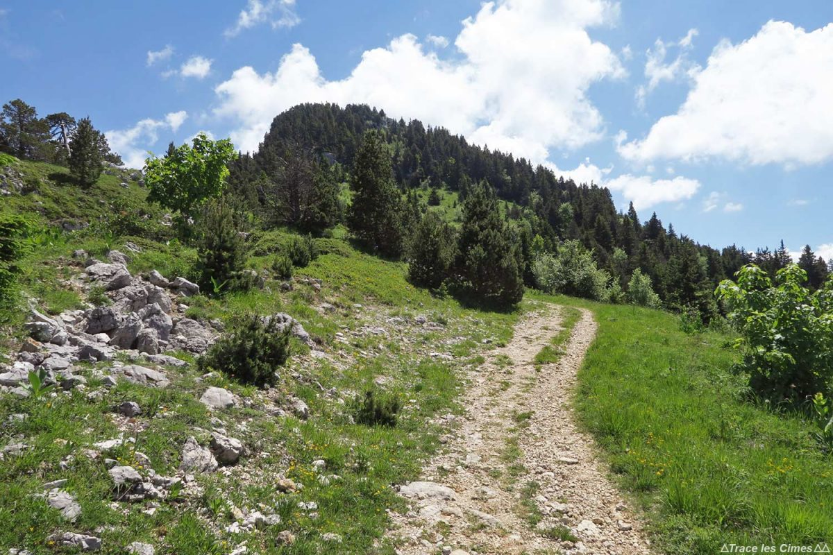 Sentier de randonnée, Le Moucherotte (Vercors)