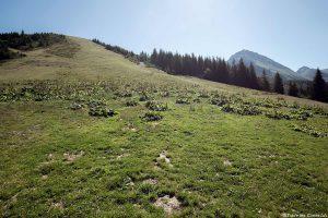 Ancienne piste de ski de Val Pelouse, Belledonne