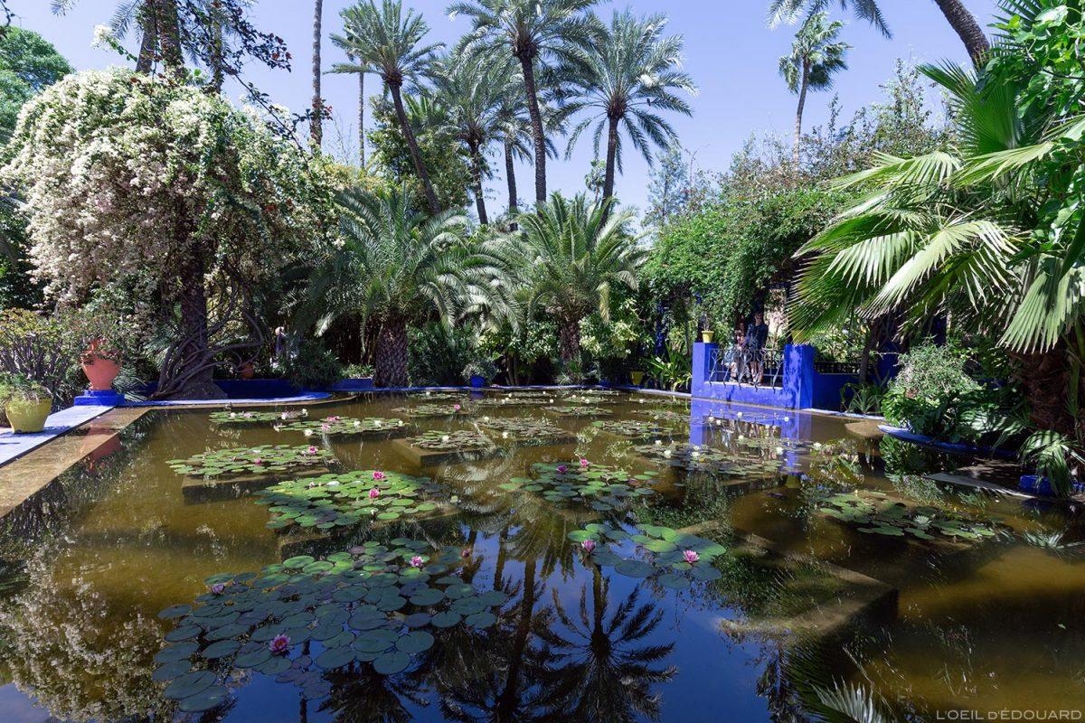 Bassin avec nénuphars dans le Jardin Majorelle à Marrakech, Maroc / Garden visit Marrakesh Morocco