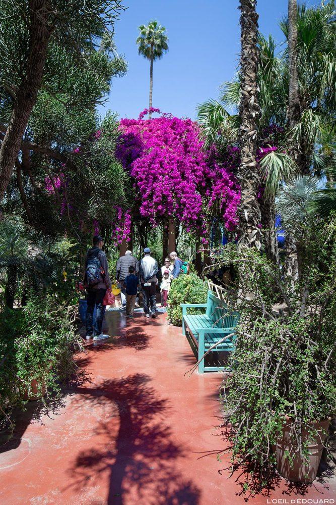 Arbre Bougainvillée dans le Jardin Majorelle à Marrakech, Maroc / Garden tree - Visit Marrakesh Morocco