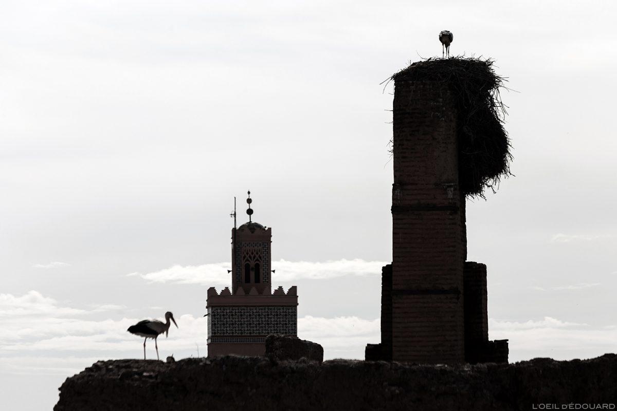 Cigognes sur les murs du Palais el-Badi de Marrakech, Maroc / Marrakesh Morocco © L'Oeil d'Édouard - Tous droits réservés