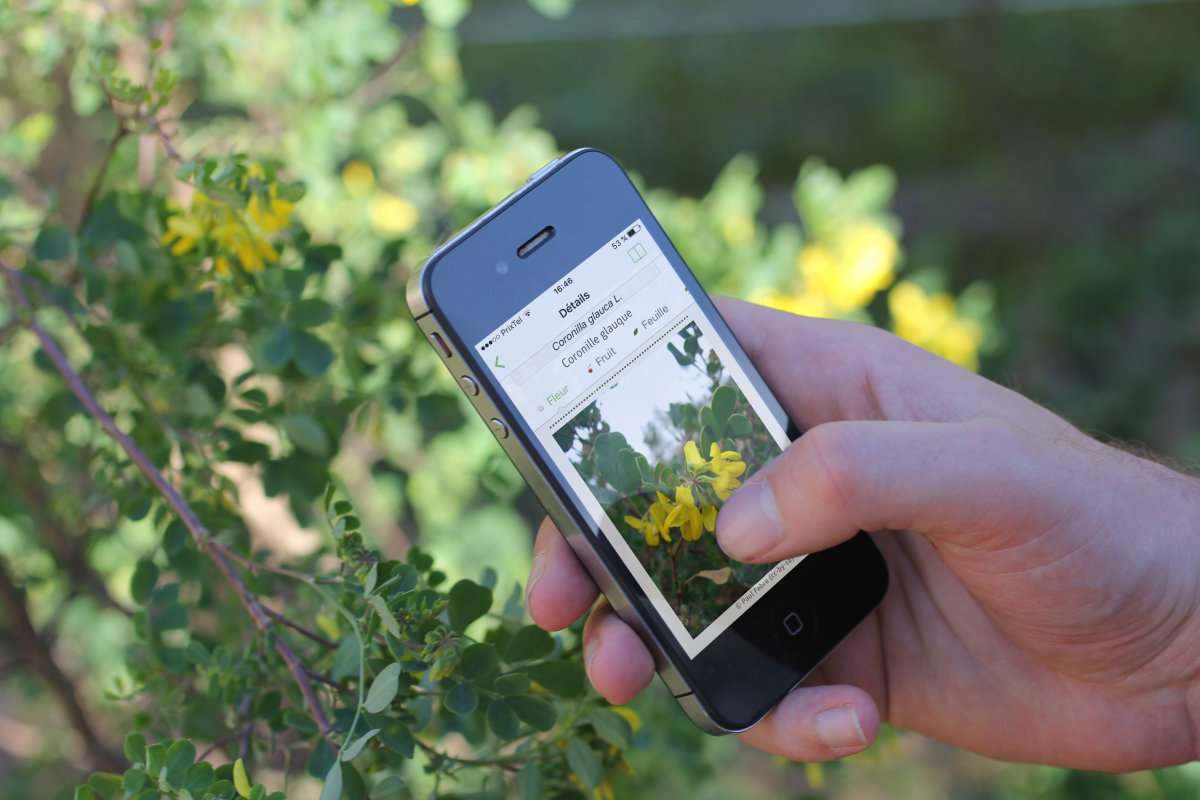 Application Pl@ntnet, identifier le nom des plantes