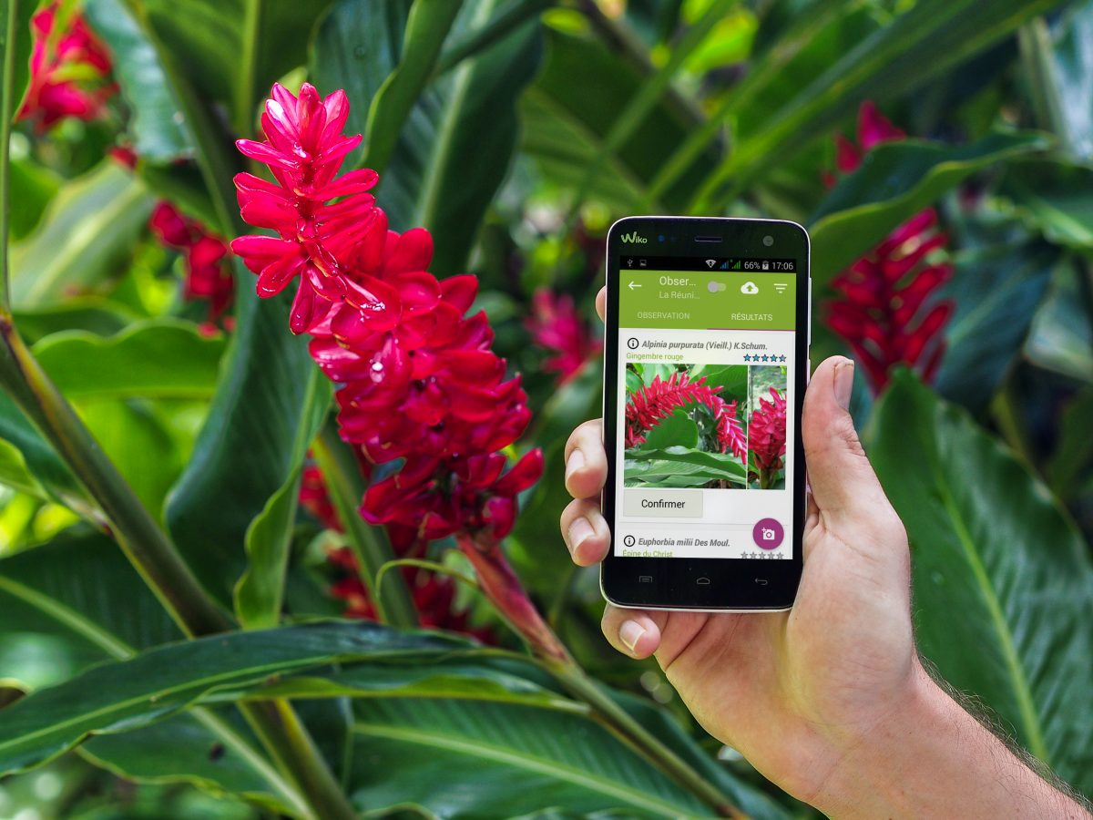 Application Pl@ntnet, connaitre le nom des fleurs