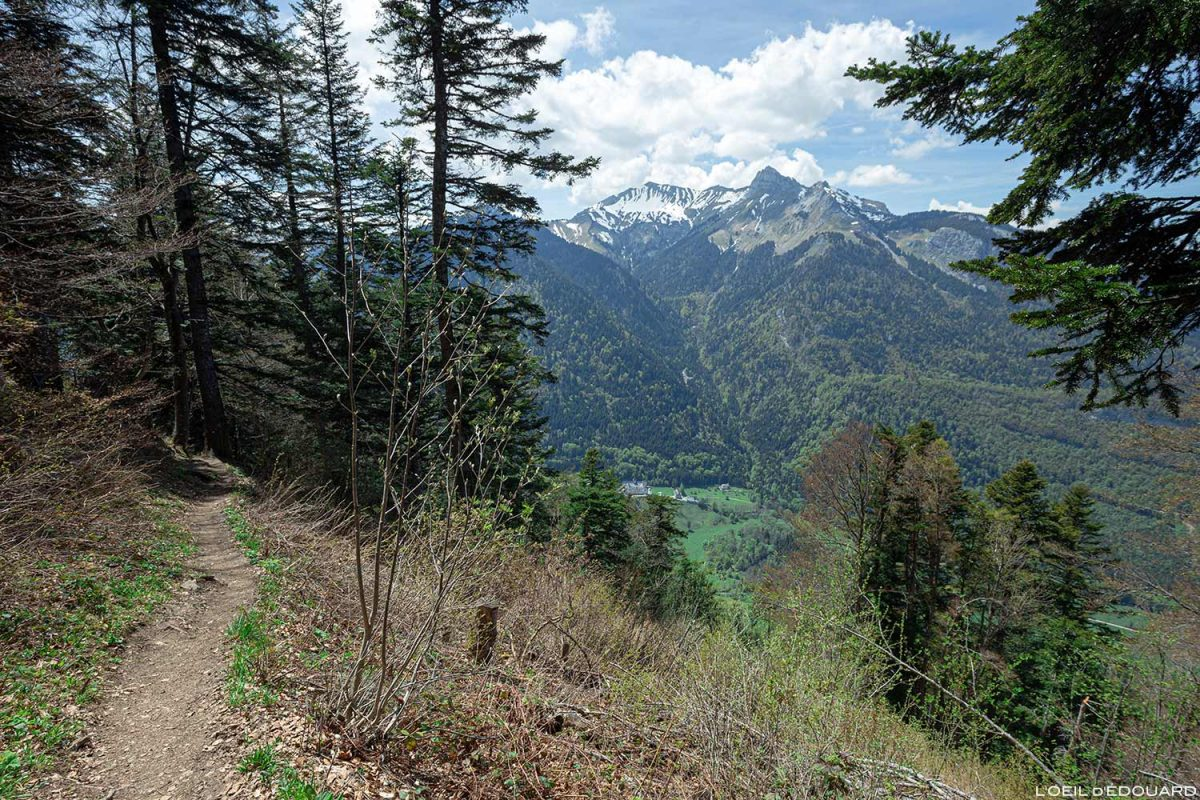 Sentier de randonnée La Belle Étoile Pointe de la Sambuy, Bauges Savoie Alpes - Paysage Montagne Randonnée Outdoor Mountain Landscape Hike Hiking