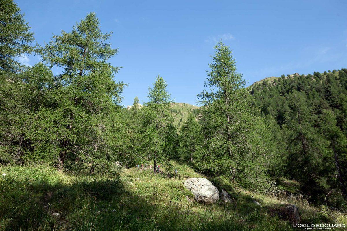Forêt de Saint-Grat - Massif du Mercantour Alpes-Maritimes Provence-Alpes-Côte d'Azur / Paysage Montagne Randonnée Trek Outdoor Landscape Mountain Hike Hike Trekking Forest
