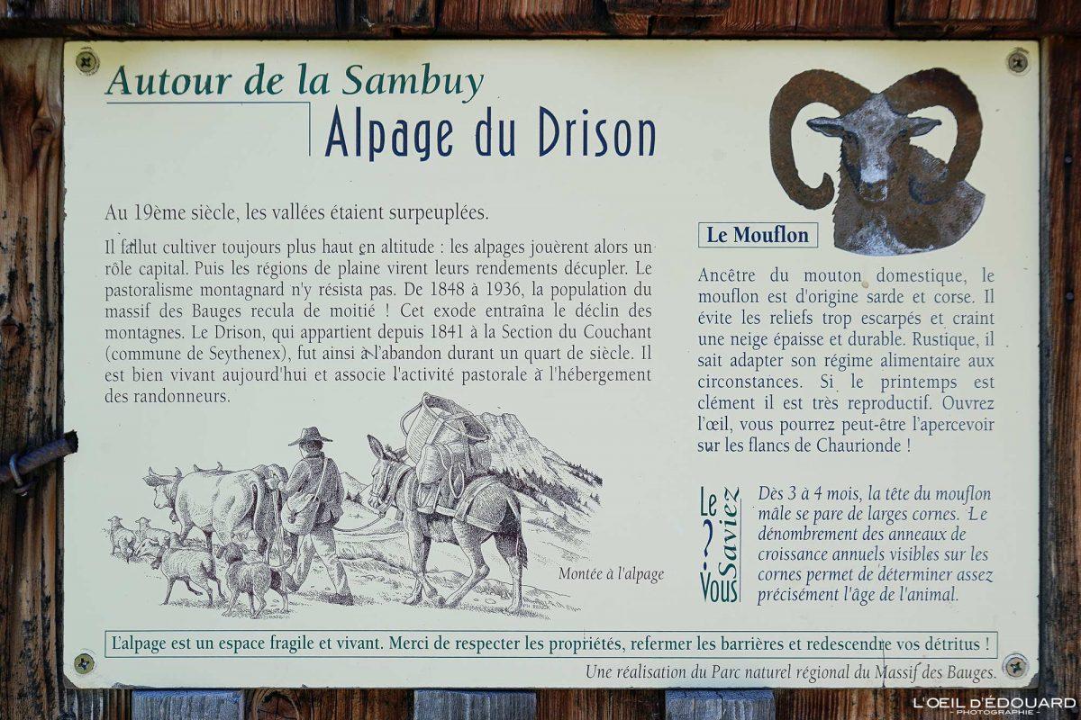 Alpage Chalet du Drison - Massif des Bauges Savoie Alpes France Vie en Montagne - Mountain Life Outdoor