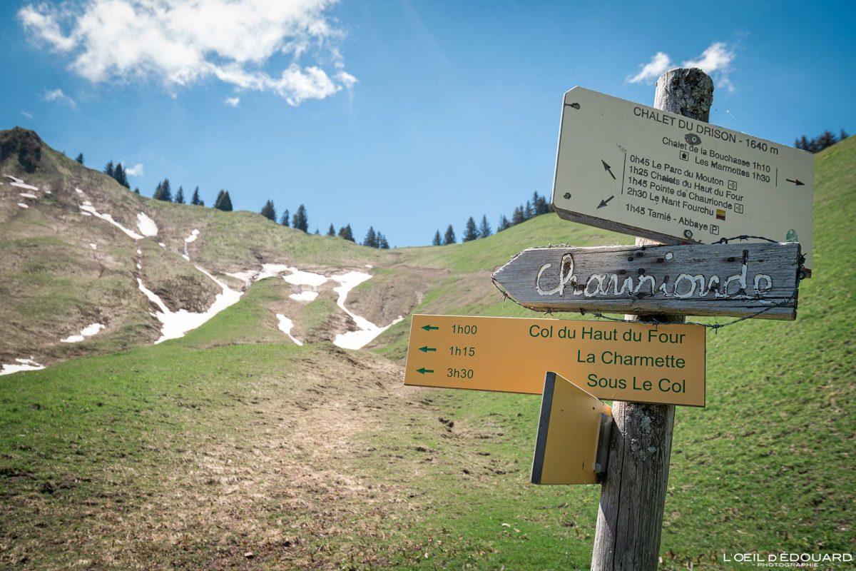 Col du Drison - Sentier de randonnée Massif des Bauges Savoie Alpes France Paysage Montagne - Mountain Landscape French Alps Outdoor Hike Hiking Trail