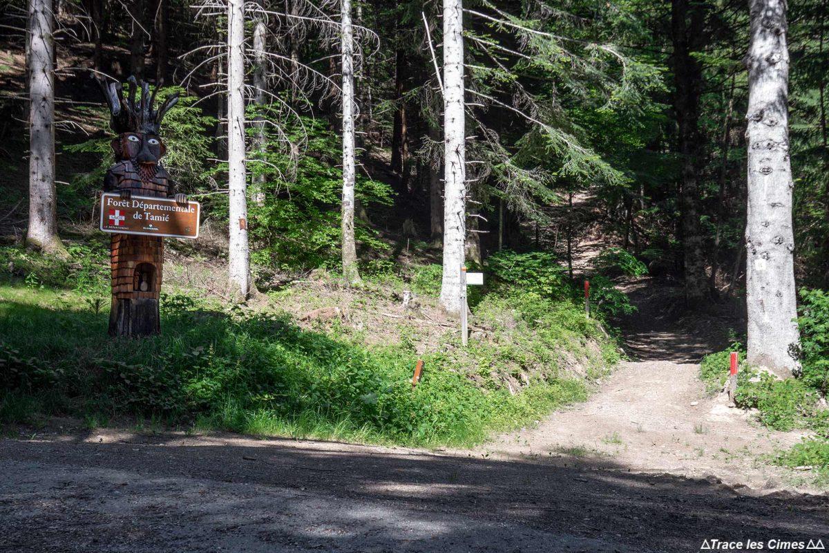 Sentier de randonnée Forêt de Tamié - Massif des Bauges Savoie Alpes France Montagne - Mountain Forest French Alps Outdoor