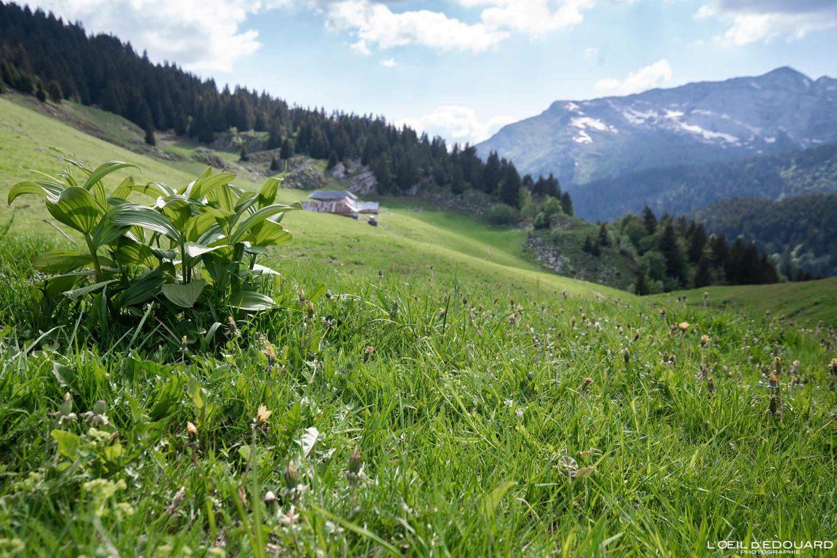 Col du Haut du Four - Massif des Bauges Savoie Alpes France Paysage Montagne - Mountain Landscape French Alps Outdoor