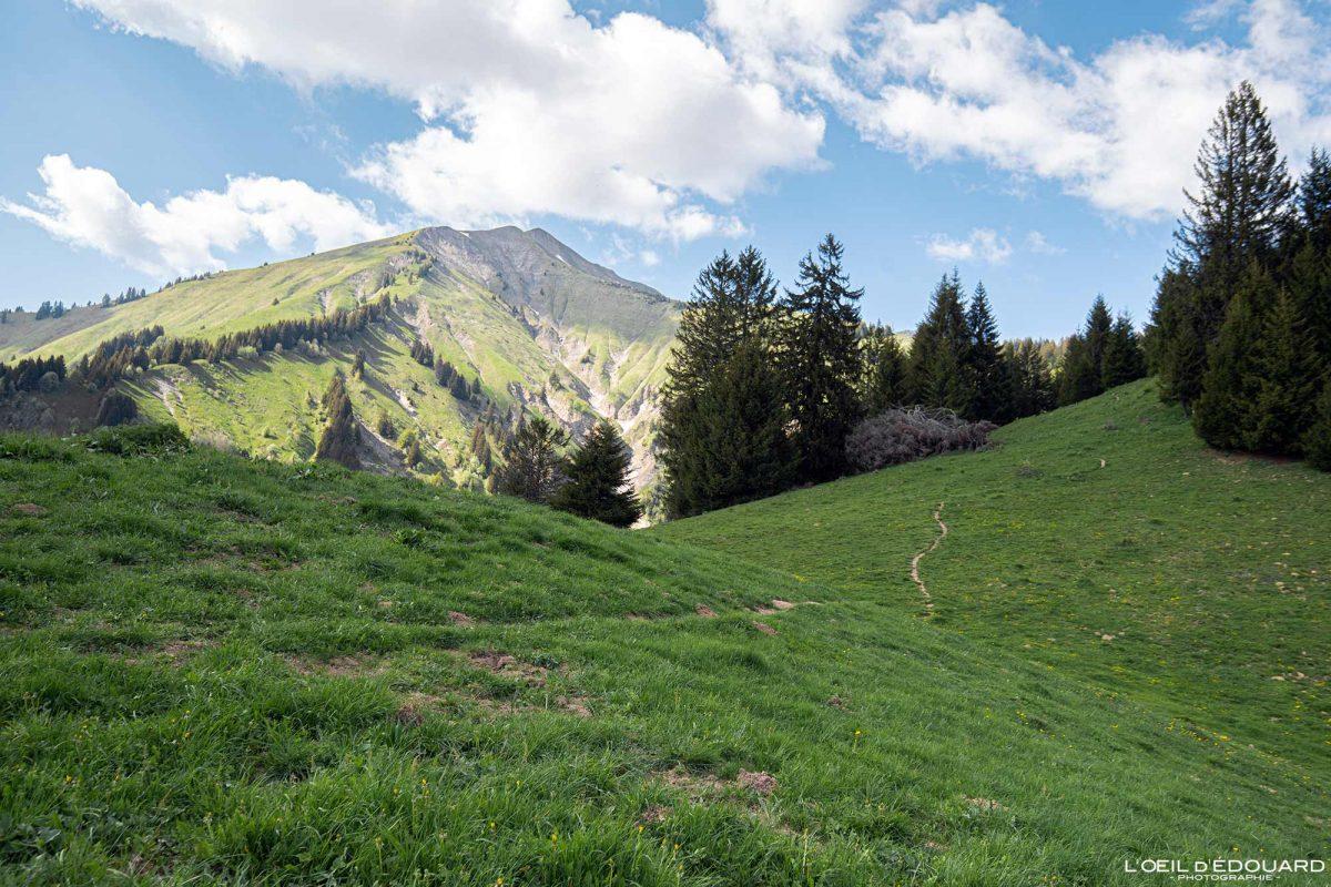 La Pointe de Chaurionde depuis le Col du Haut du Four - Massif des Bauges Savoie Alpes France Paysage Montagne - Mountain Landscape French Alps Outdoor