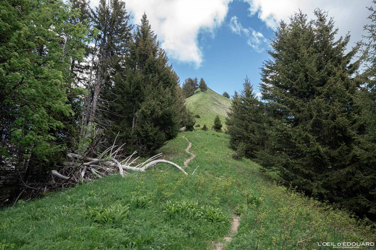 Sentier de randonnée Parc du Mouton - Massif des Bauges Savoie Alpes France Forêt Montagne - Mountain Forest French Alps Outdoor Hike Hiking Trail