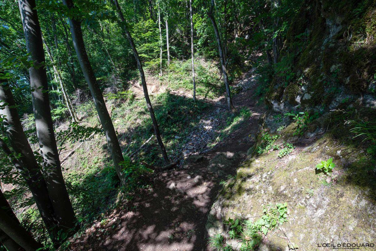 Sentier de randonnée au Mont Veyrier - Annecy Haute-Savoie Alpes France Forêt Montagne - Mountain Forest French Alps Outdoor Hike Hiking Trail