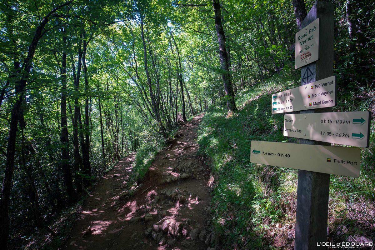 Sous Pré Vernet - Sentier de randonnée au Mont Veyrier - Annecy Haute-Savoie Alpes France Forêt Montagne - Mountain Forest French Alps Outdoor Hike Hiking Trail