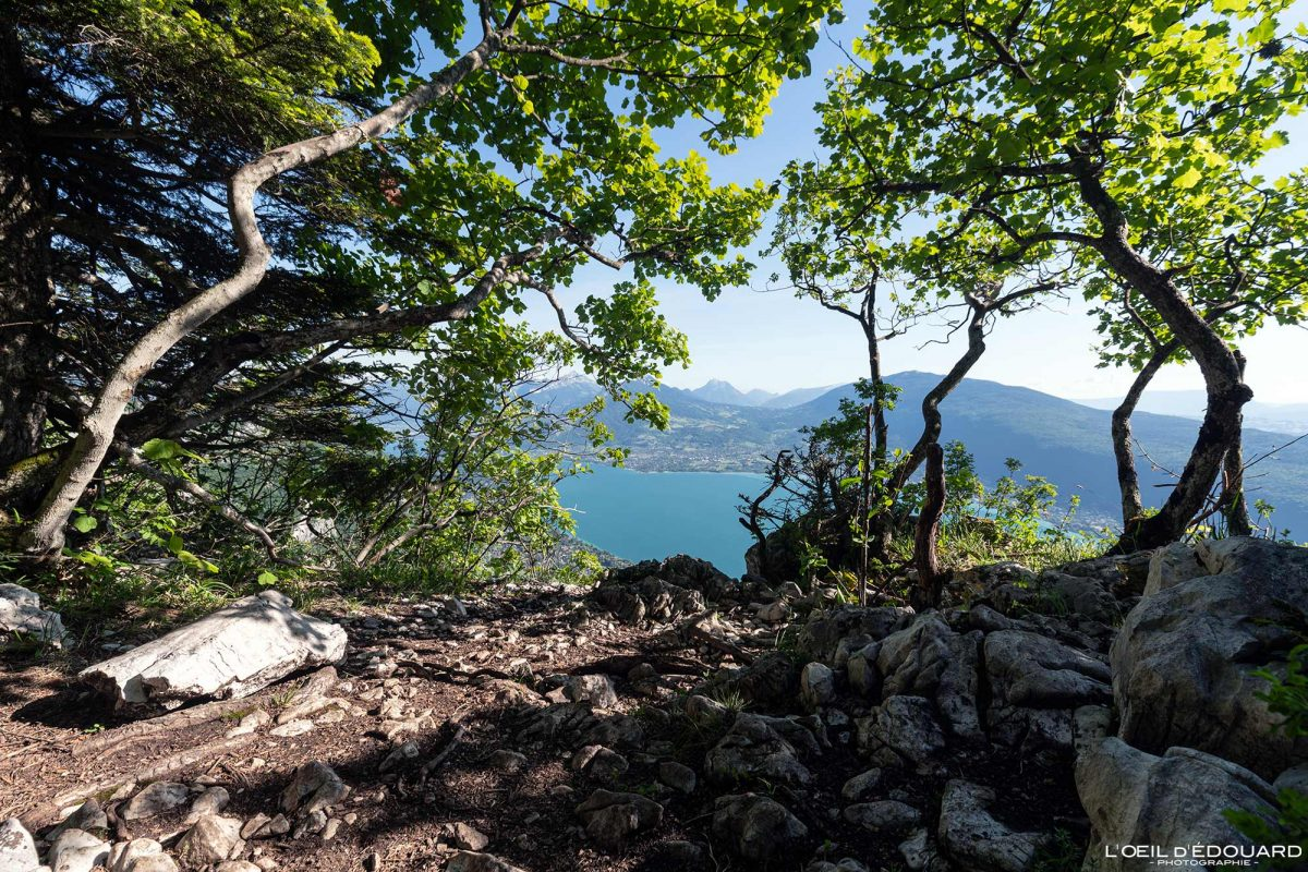 Vue sur le Lac d'Annecy - Randonnée Mont Veyrier - Annecy Haute-Savoie Alpes France Forêt Montagne - Mountain Landscape French Alps Outdoor Hike Hiking view lake