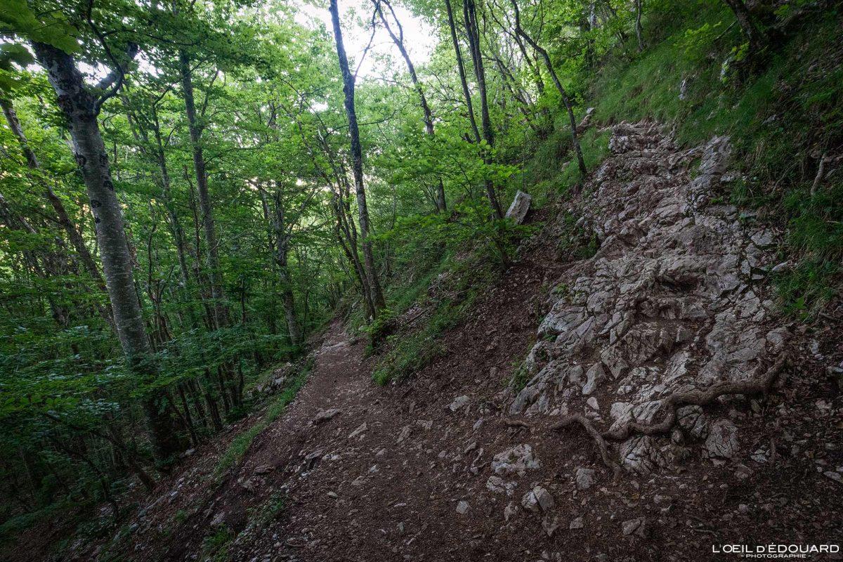 Sentier de randonnée Mont Baron Mont Veyrier Annecy Haute-Savoie Alpes France Montagne - Mountain Landscape French Alps Outdoor Hike Hiking trail