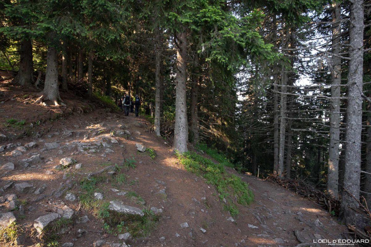 Itinéraire sentier randonnée Lac du Crozet Belledonne Isère Alpes France Forêt Outdoor Forest hike hiking French Alps