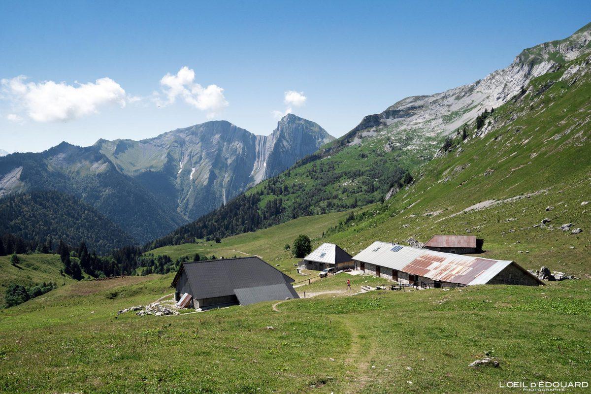 Randonnée Chalets d'Orgeval Massif des Bauges Savoie Alpes France Paysage Montagne Pécloz - House Mountain Landscape French Alps Outdoor Hike Hiking