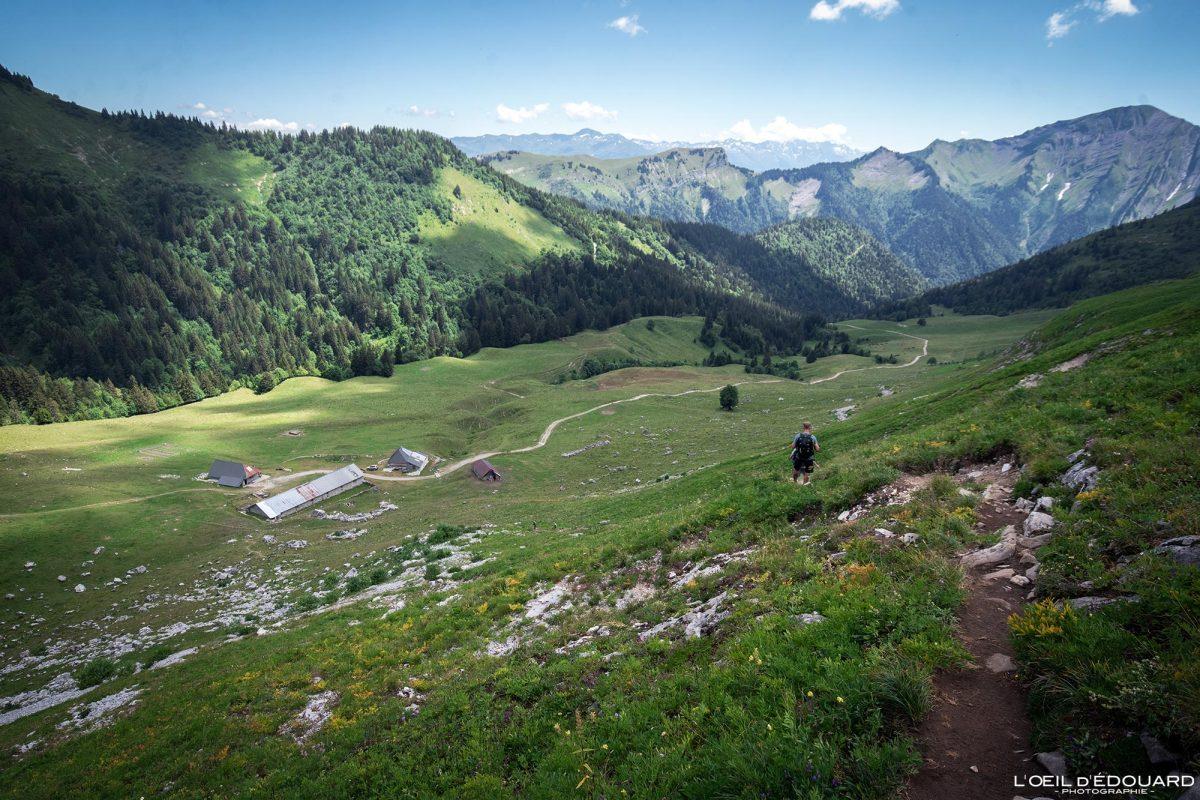 Randonnée Chalets d'Orgeval Massif des Bauges Savoie Alpes France Paysage Fleurs Montagne - Mountain Landscape French Alps Outdoor Hike Hiking trail