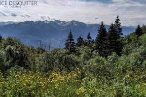 Paysage Montagne Chaine de Belledonne Forêt Massif de la Chartreuse Isère Alpes France Outdoor French Alps Forest Mountain Landscape