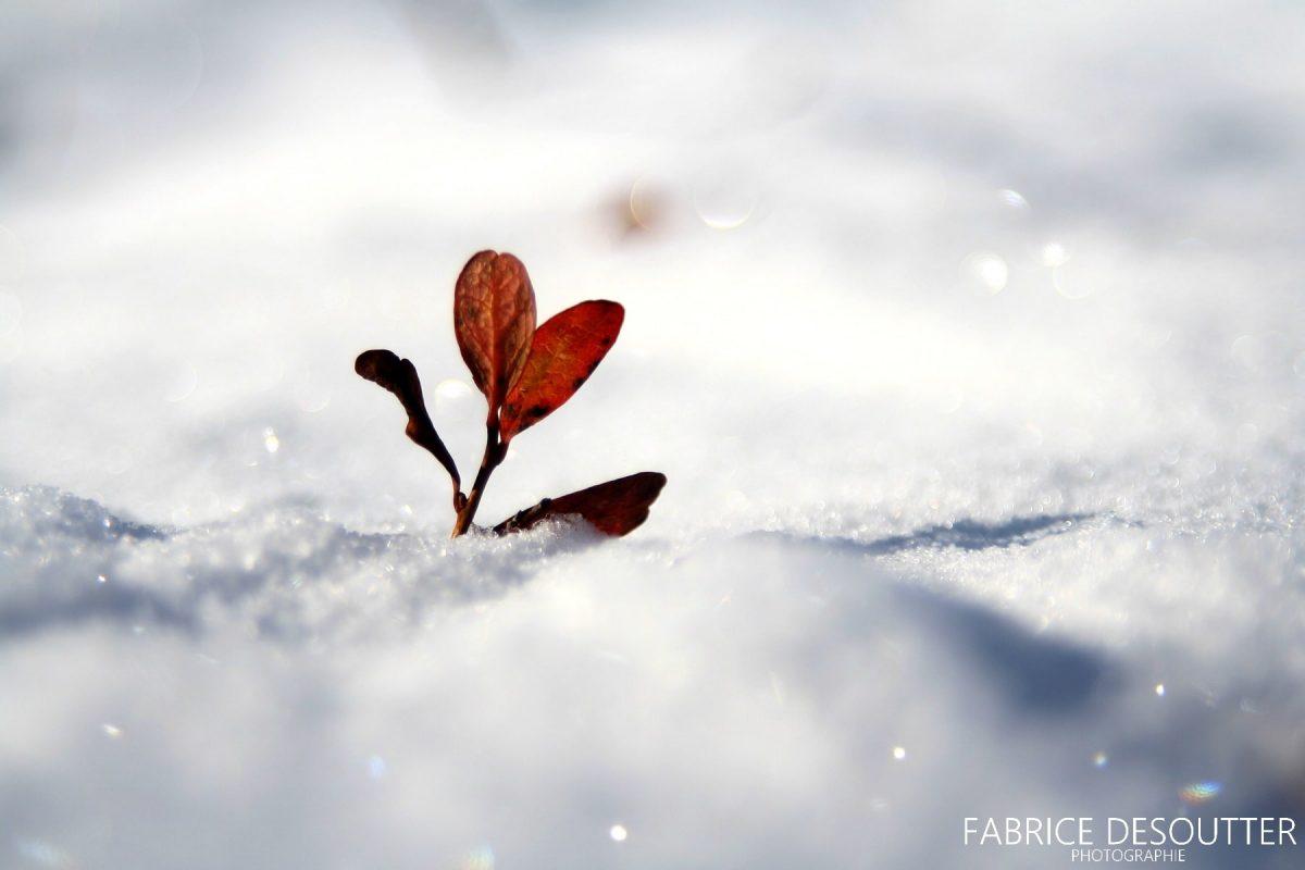 Plante dans la neige - Blog Voyage & Outdoor Trace Ta Route