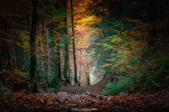 Chemin de randonnée dans la forêt à l'automne - Orgeval Massif des Bauges Savoie Alpes Paysage Montagne Outdoor Colors Autumn Forest Mountain Landscape Hiking Trail Hike