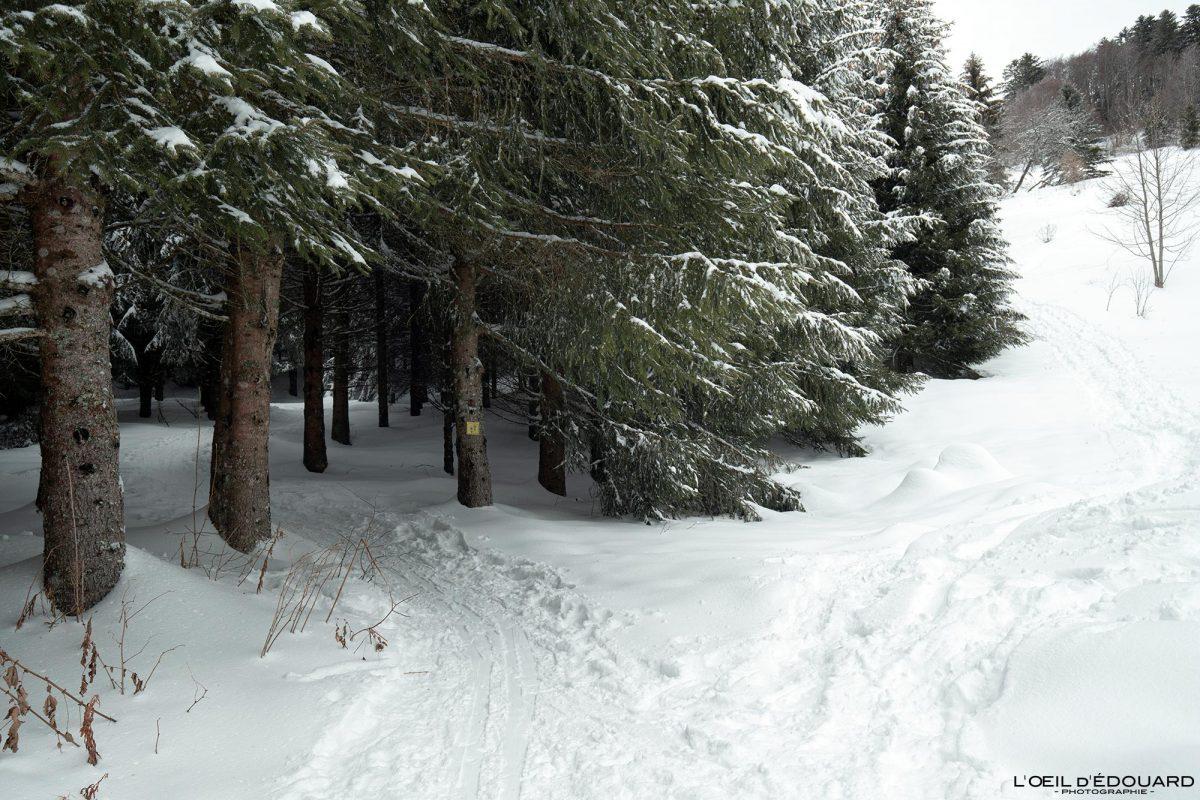 Combe de l'Ours Randonnée Raquettes Le Revard Massif des Bauges Savoie Alpes Montagne Forêt Hiver Neige France Outdoor French Alps Mountain Forest Winter Snow