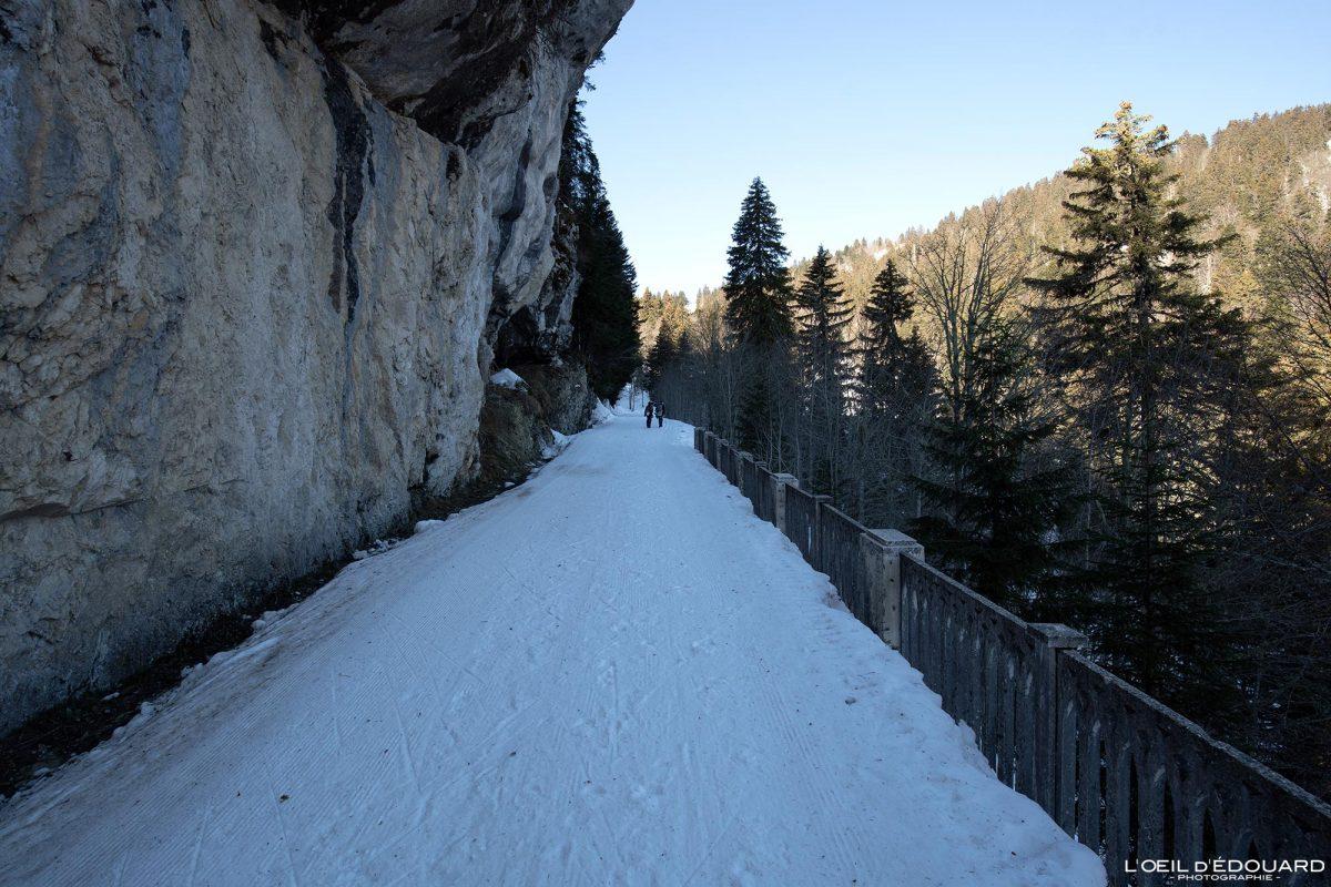 Route forestière du Charmant Som en hiver Piste de Ski Nordique Col de Porte Massif de la Chartreuse Isère Alpes Paysage Montagne Neige France Outdoor French Alps Mountain Landscape Winter Snow Skiing