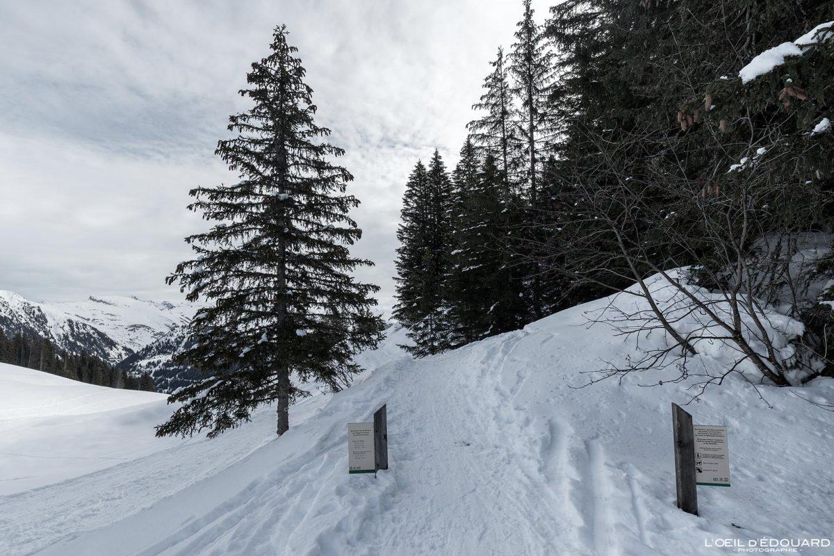 Col du Pré Itinéraire Ski de Randonnée Roche Parstire Massif du Beaufortain Savoie Alpes Paysage Montagne Hiver Neige France Outdoor French Alps Mountain Landscape Winter Snow