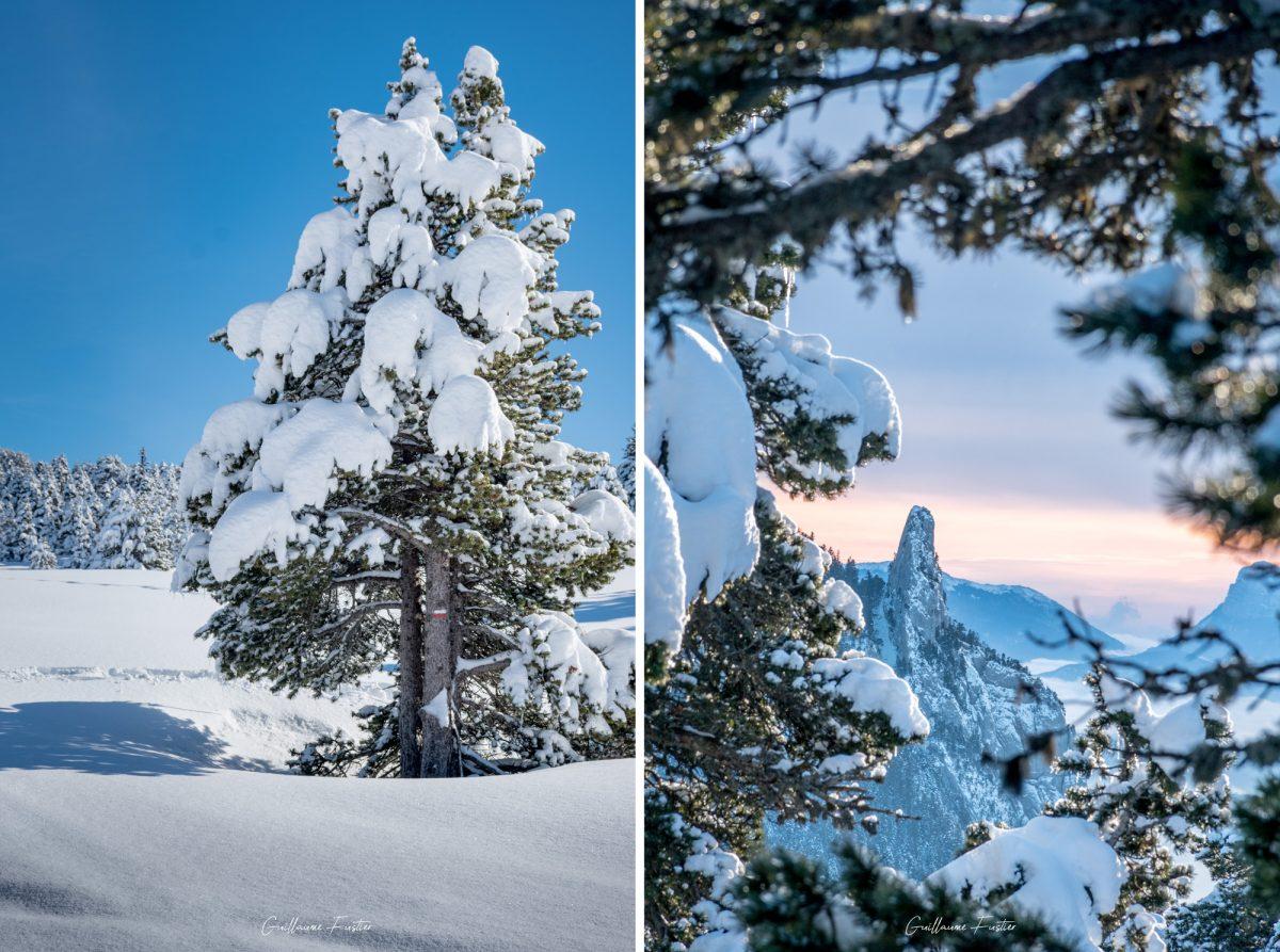 Arbre sous la neige Hauts-Plateaux du Vercors Hiver Paysage Montagne Isère Alpes France Outdoor French Alps Mountain Landscape Winter Snow Tree