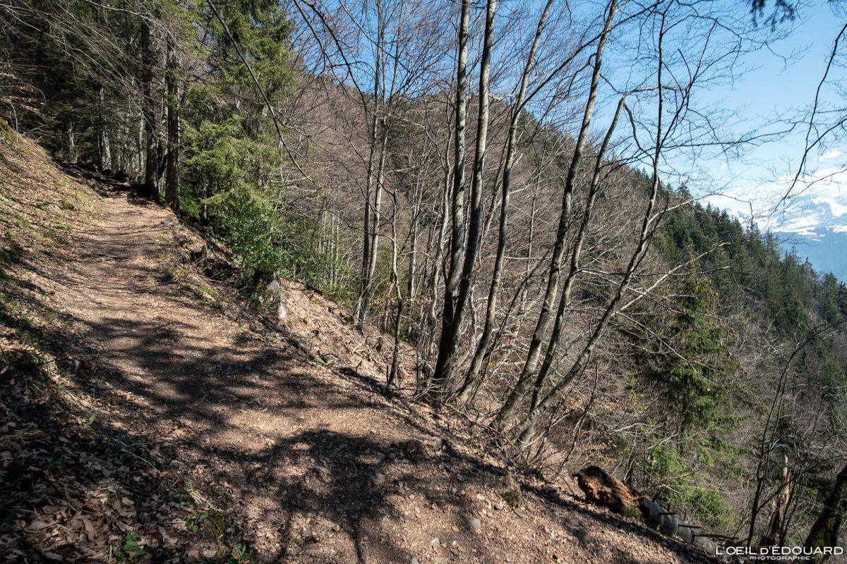Sentier de randonnée Le Môle Massif du Chablais Haute-Savoie Alpes France Forêt Montagne Outdoor French Alps Mountain Forest Hike Hiking trail