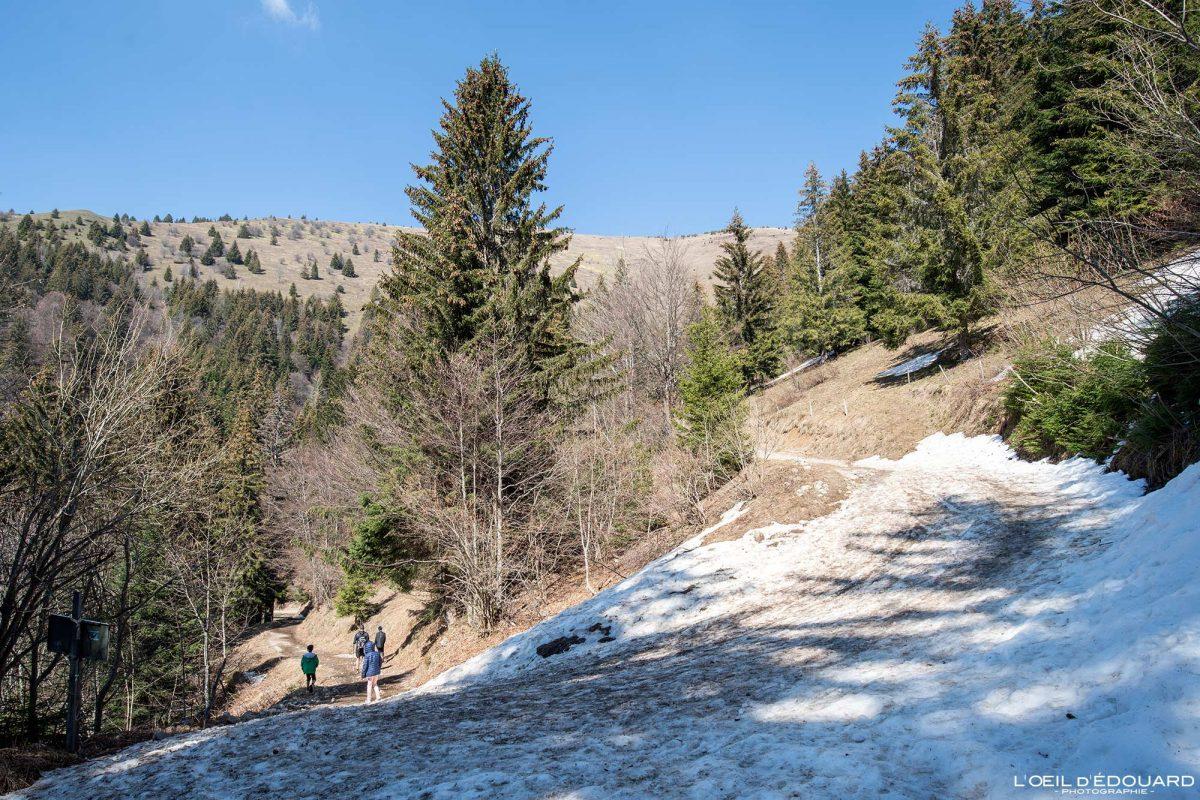 Piste forestière Randonnée Le Môle Massif du Chablais Haute-Savoie Alpes France Forêt Montagne Outdoor French Alps Mountain Forest Hike Hiking trail