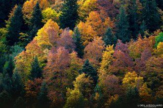 Couleurs Forêt à l'automne Massif des Bauges © L'Oeil d'Édouard