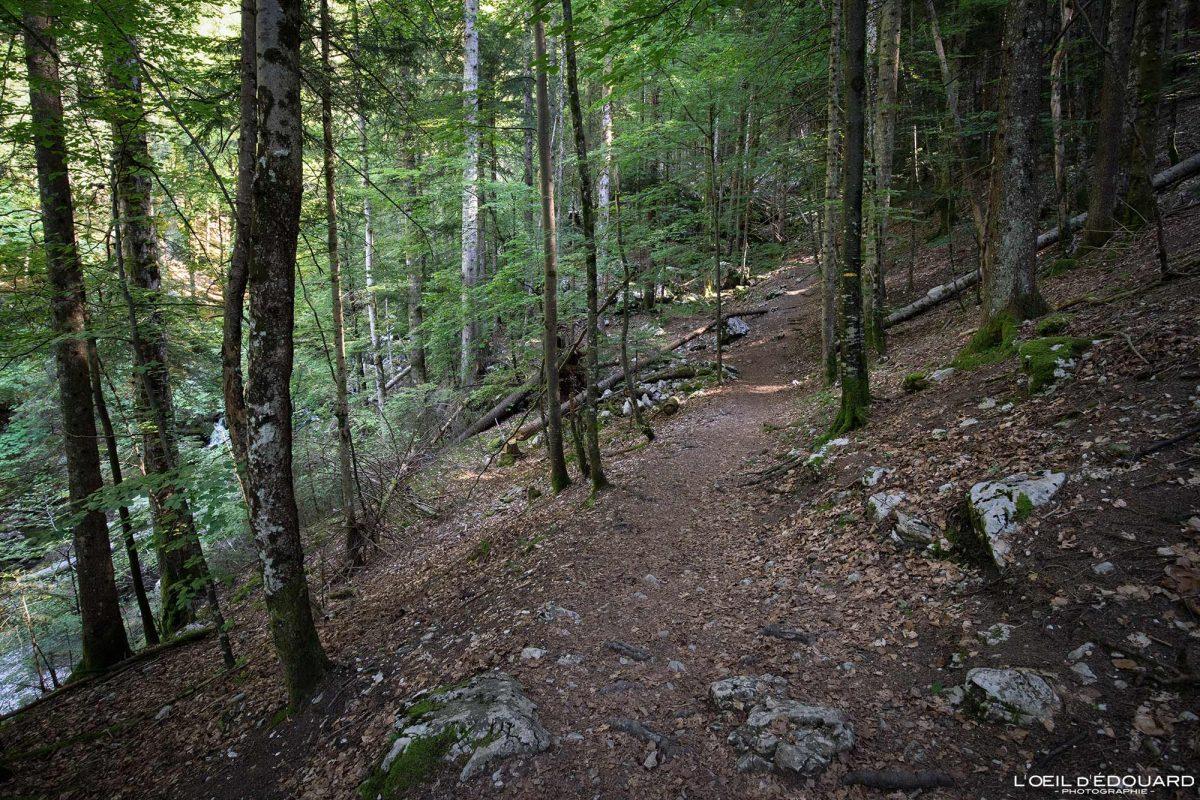 Sentier Randonnée Cirque de Saint-Même Massif de la Chartreuse Isère Alpes France Montagne Forêt Outdoor French Alps Mountain Forest Hike Hiking Trail