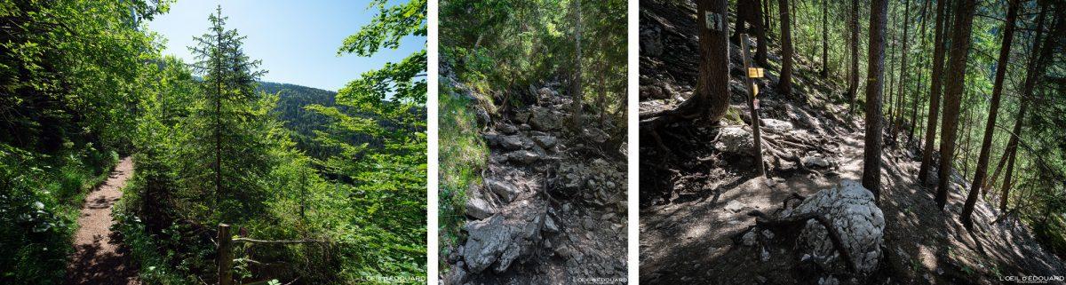 Sentier Randonnée Cirque de Saint-Même Massif de la Chartreuse Savoie Alpes France Montagne Forêt Outdoor French Alps Mountain Forest Hike Hiking Trail